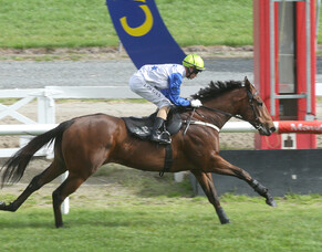 Pike picks Trelawney horses for Queensland