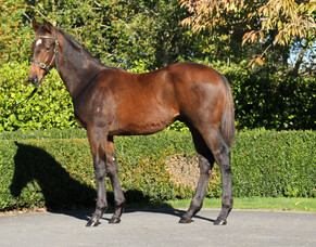 NZB May Sale reaps positive results