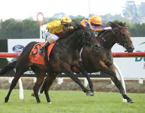Sword of Osman back to winning form in Te Rapa feature
