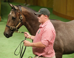 Jimmy Choux colt tops Trelawney's Book 2 draft