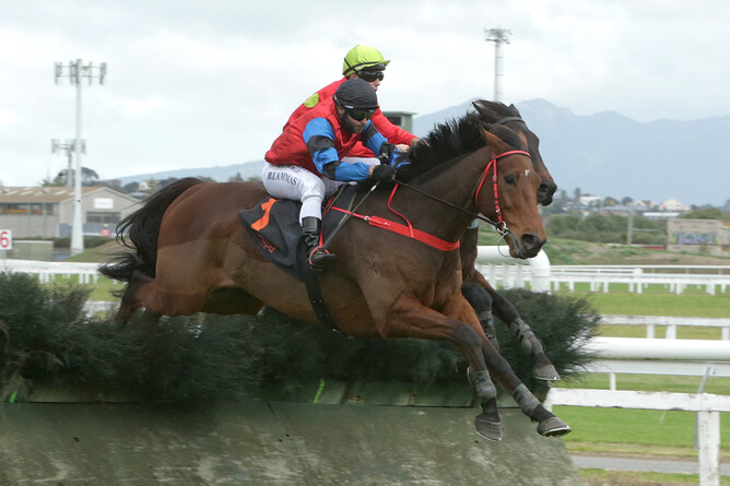 Shamal will contest the AHD Hawke's Bay Steeplechase (4800) at Hastings on Saturday. - Trish Dunell
