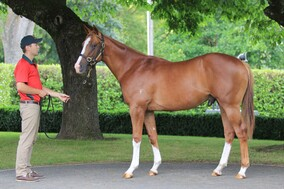 Lot 187 - Shooting to Win x Enide