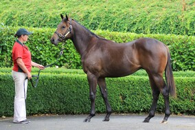 Lot 36 - Dissident x Are There Any