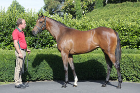 Lot 935 - Contributer x Starring