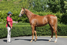 Lot 486 - Zoustar x Totally Sure