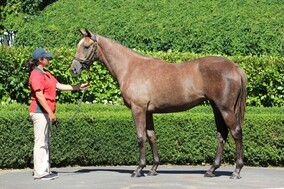 Lot 341 - Reliable Man x Line of Flight