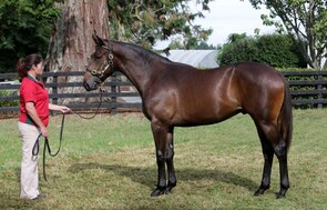 Lot 248 - More Than Ready x Danalaga