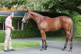 Lot 445 - Exceed and Excel x Zarzuela