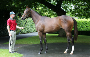 Lot 367 - O'Reilly x Laurinel Princess