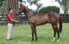 Lot 391 - O'Reilly x Martini Red