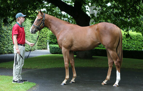 Lot 110 - Pins x The Iffrraaj Dame