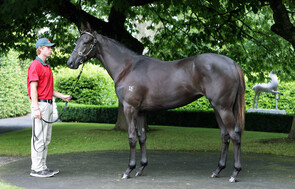 Lot 463 - Savabeel x Pinovation