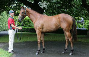 Lot 182 - Jimmy Choux x A Touch of Ruby
