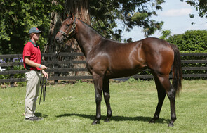 Lot 864 - Iffraaj x Exquisite Choice
