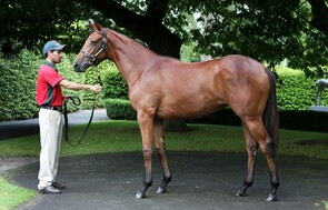 Lot 1034 - Ocean Park x Miss Danewood