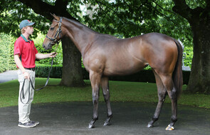 Lot 374 - O'Reilly x Lillet