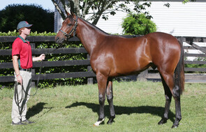 Lot 359 - High Chaparral x Lady of The House