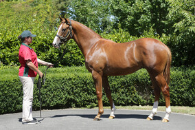 Lot 573 - Sebring x Are There Any